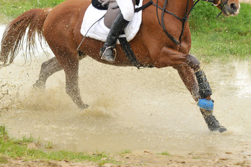 cross equestre