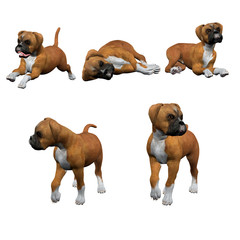 3D Boxer Puppies