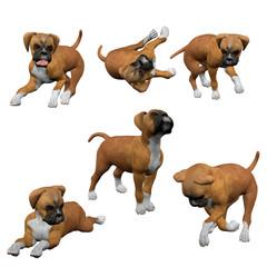 3D Boxer Puppies