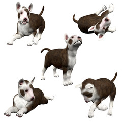 3D Bull Terrier Puppies