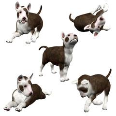 3D Bull Terrier Puppies