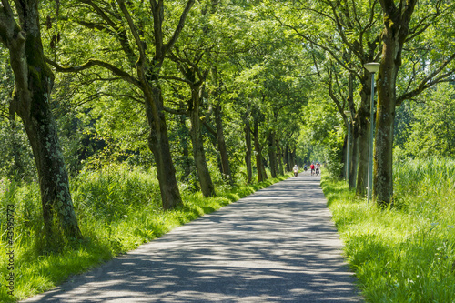 Road surrounded by old green trees