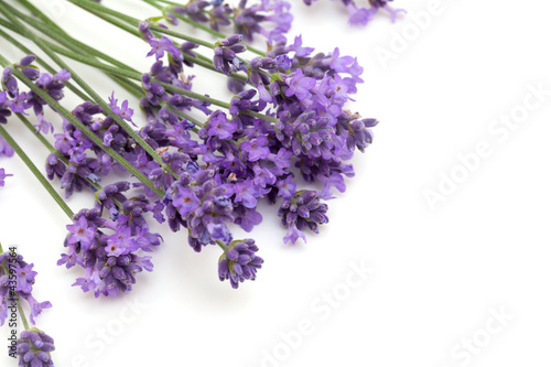 lavender flowers and empty space for your text - 43597564