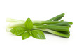 spring onion and basil