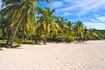 Palms on the beach - Africa - Madagascar - Andilana