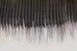 Detail of Baleen