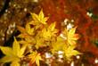 Goldene Herbstpracht