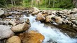 Cascades on the forest river - horizontal movement of the camera