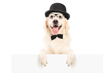 A dog with hat and bow tie standing behind a white panel