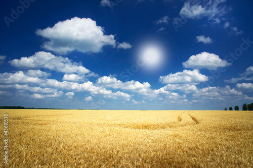 Golden wheat  and funny sun in the sky.