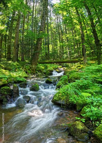 Leinwandbild Motiv Ruisseau vosgien