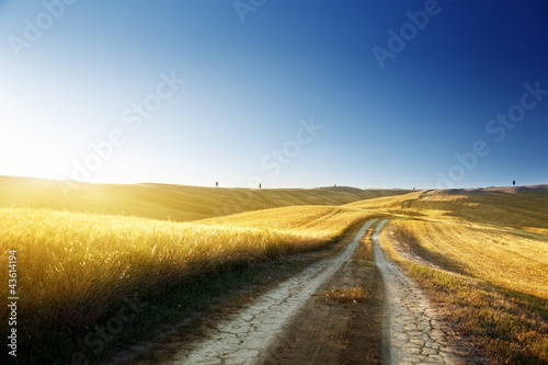 ground road on field in Tuscany, italy
