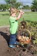 Kleiner Junge bei der Kartoffelernte