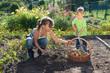 Kinder helfen bei der Ernte
