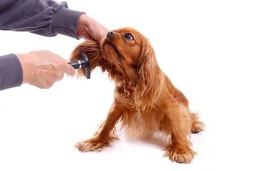 Hund beim Kämmen