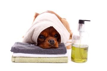 junger Hund mit Handtuch und Seife