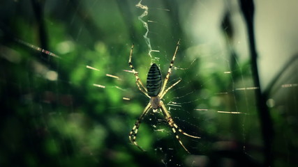Spider waiting on its web