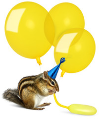 Funny chipmunk inflating yellow balloons, wearing birthday hat