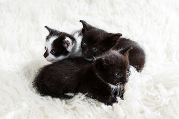 Curious group of kittens