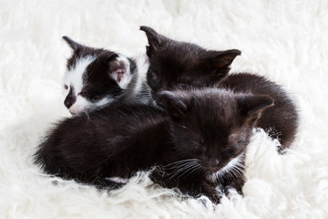 Tired group of kittens