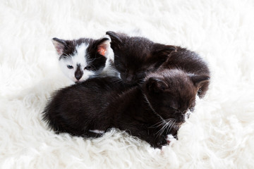 Group of kittens cuddling