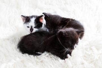 Group of kittens cuddling