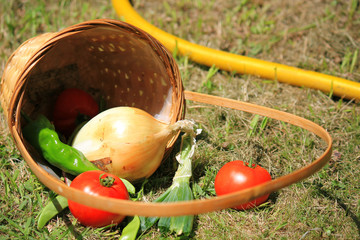 Cesto verduras ecológicas huerto