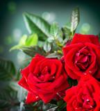 Fototapety Rose Flower