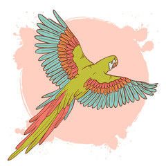 Colorful hand drawn ara parrot flying isolated