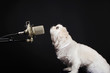 Dog standing in front of a microphone