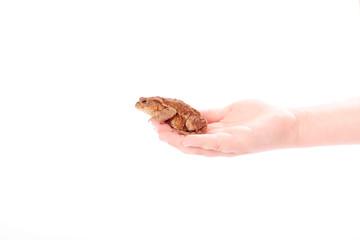 Kröte sitzt auf der Hand
