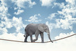 elephant on rope