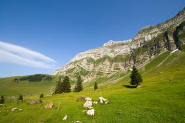 Säntis - Alpstein - Alpen - Schweiz