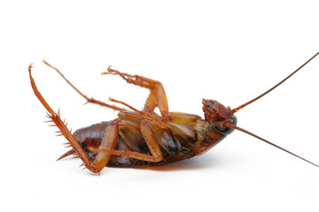 cockroaches Dead