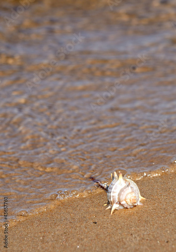 Vertical view of seashell on the sea coast