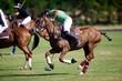 polo sport a cheval