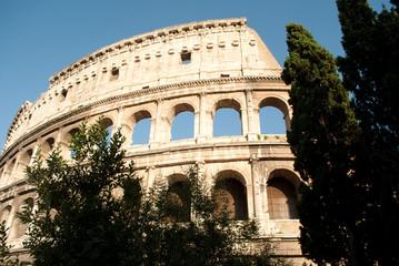Colosseum bush and tree view