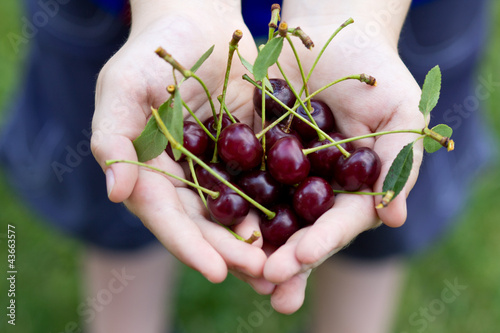 Cherry in hands of the child