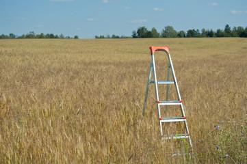 Stepladder in the field