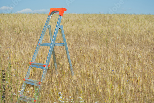 Stepladder in the field