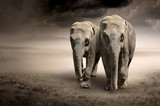 Pair of elephants in motion - 43670148