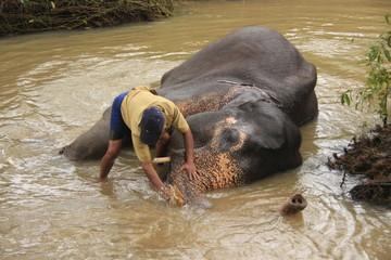 Man bathing an elehpant, Sri Lanka