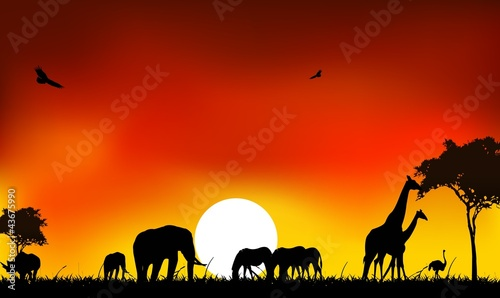 beautyful silhouette of animal wild life with sunset background