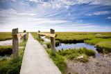 Fototapety Pfad durch die Salzwiesen am Wattenmeer