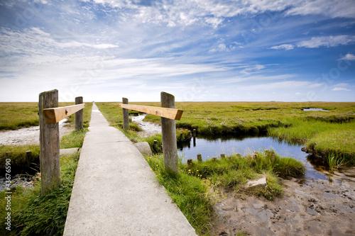 Fototapeten,north sea,trampelpfad,marsch,salzwiese