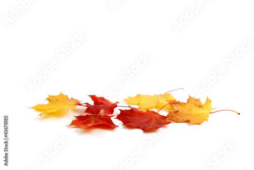 canvas print picture Herbstblättern
