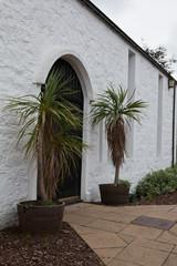 Palmiers de Plockton, Ecosse