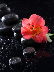 Spa stones with drops and red flower on black background