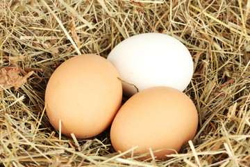brown and white eggs in a nest of hay close-up