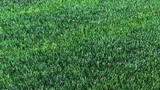 The lawn on a roll. 3d animation